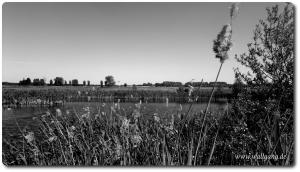Wallgang_de_s_w_bild_04