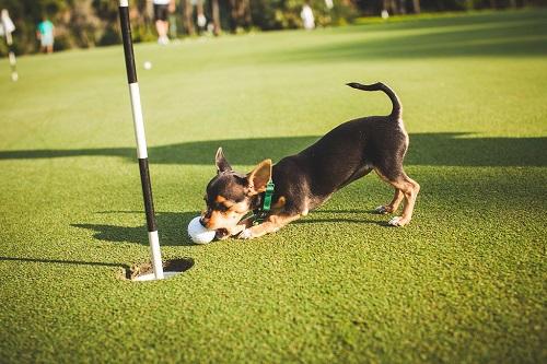 Humane Society Golf WH photo_small